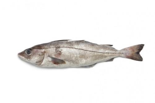 Eglefin
